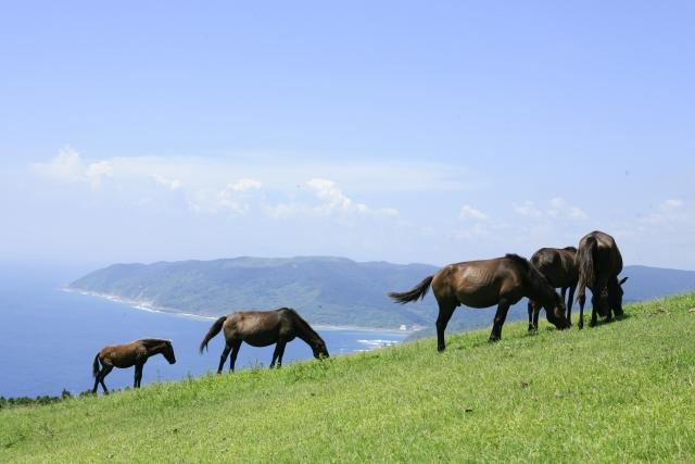移動の進化を振り返る2~人に速度を与えた馬での移動編